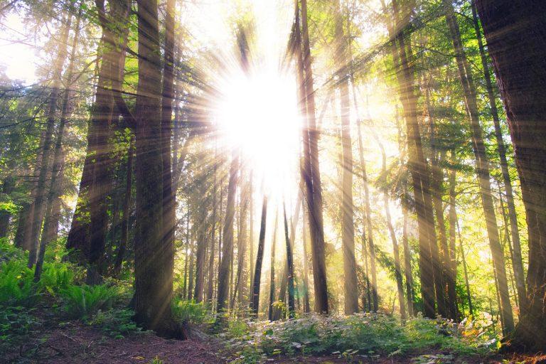 forest-984413_1920 Pixabay